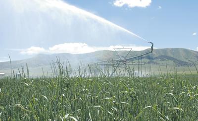 Growers see grains of optimism