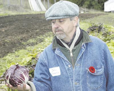 Seed tests yield winter-hardy greens