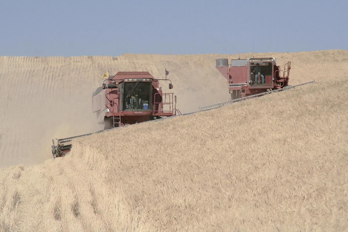Wheat trade