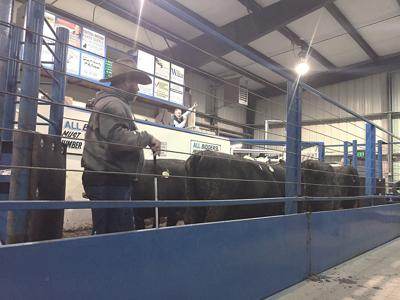 Selected Western livestock auctions
