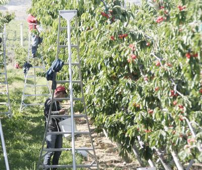 Larson Orchard