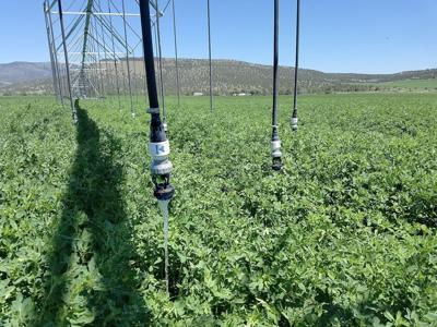 High-efficiency irrigation pays off