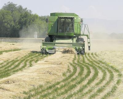 Grass seed harvest