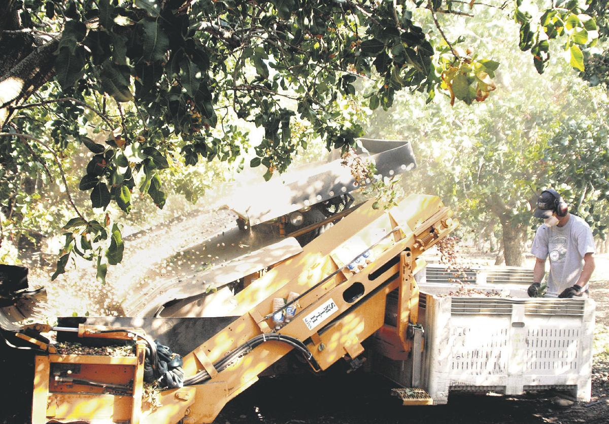 Pistachio handlers ramp up safety