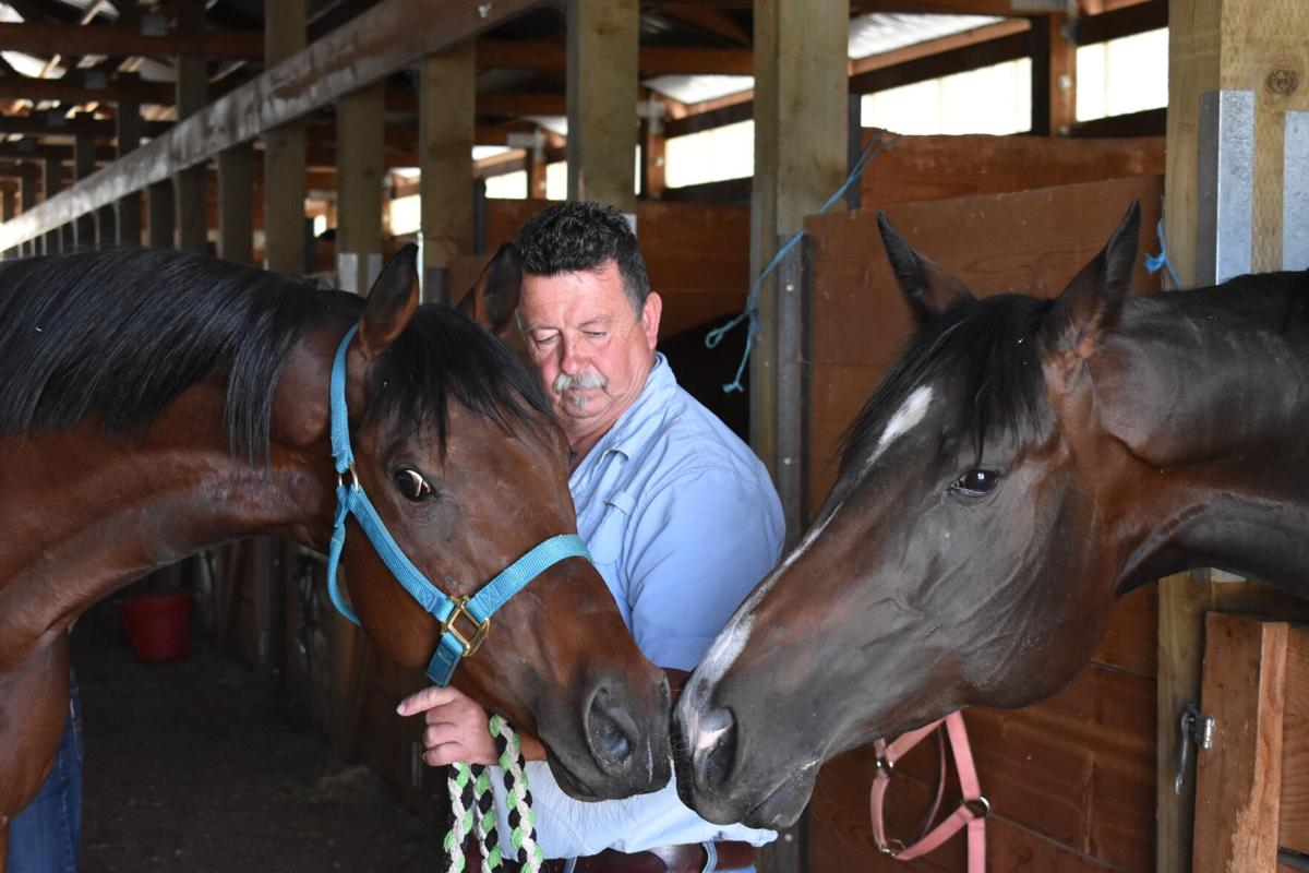 Stewart and horses