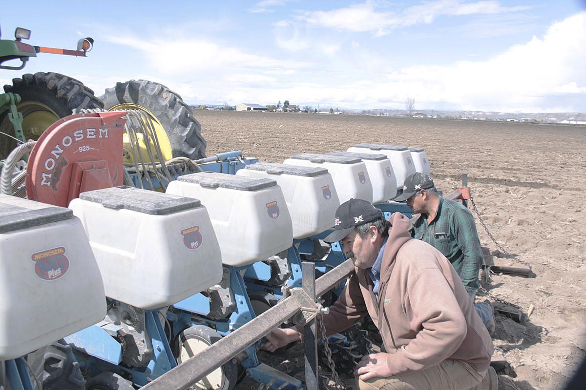 Sugar beet planting 2