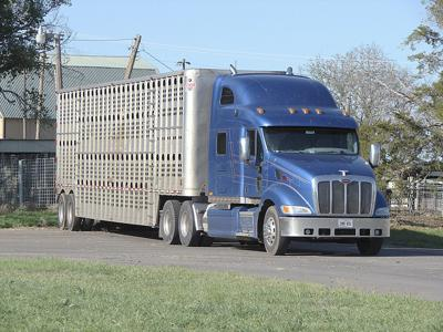 DOT again delays ELD mandate for livestock haulers