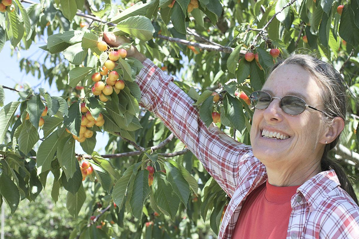 WSU relocates orchard to Spillman Farm