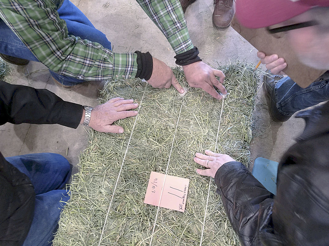 2018 Hay King Contest at the Fall Forage Festival