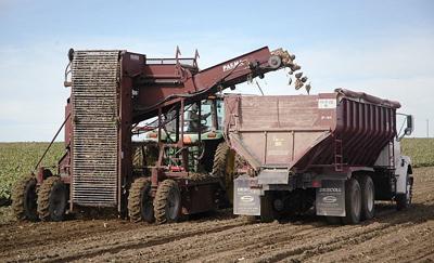 Sugar beet price outlook weak in near term