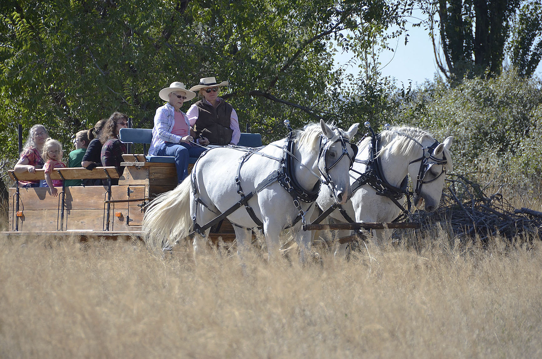 Test Your Horse Knowledge With Our Annual Equine Quiz Livestock Horses Capitalpress Com
