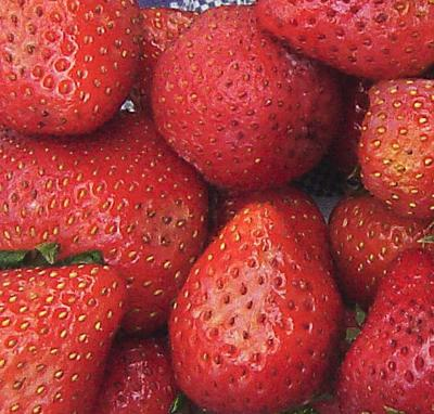 Oregon farm sues over strawberries
