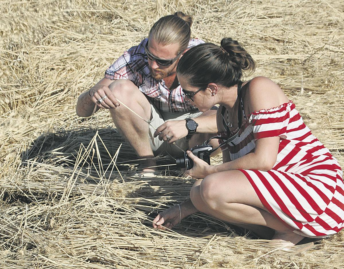Crop circle draws visitors