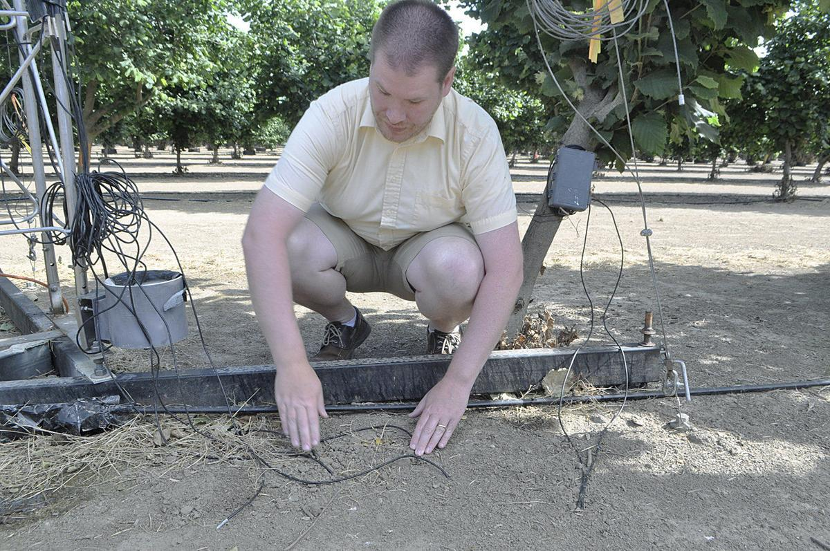 Hazelnut research to set bar for irrigation