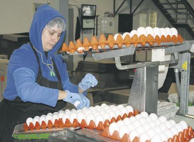 Schrader to sponsor egg-deal bill