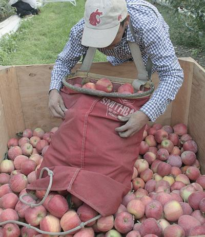 Biden's immigration proposal renews calls for farm labor reforms