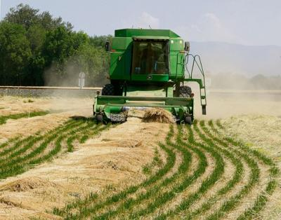 Grass seed acreage stabilizes in Oregon