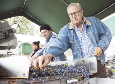Vineyard, winery work in progress