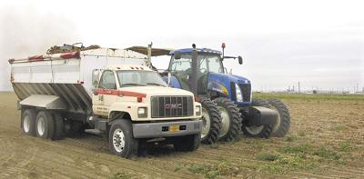 U.S. pushes potato exports to Mexico
