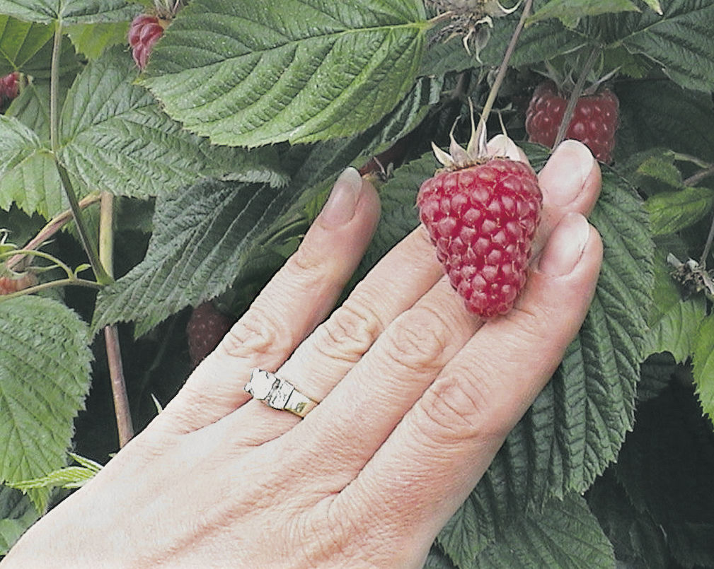 Health focus steadily lifts caneberries