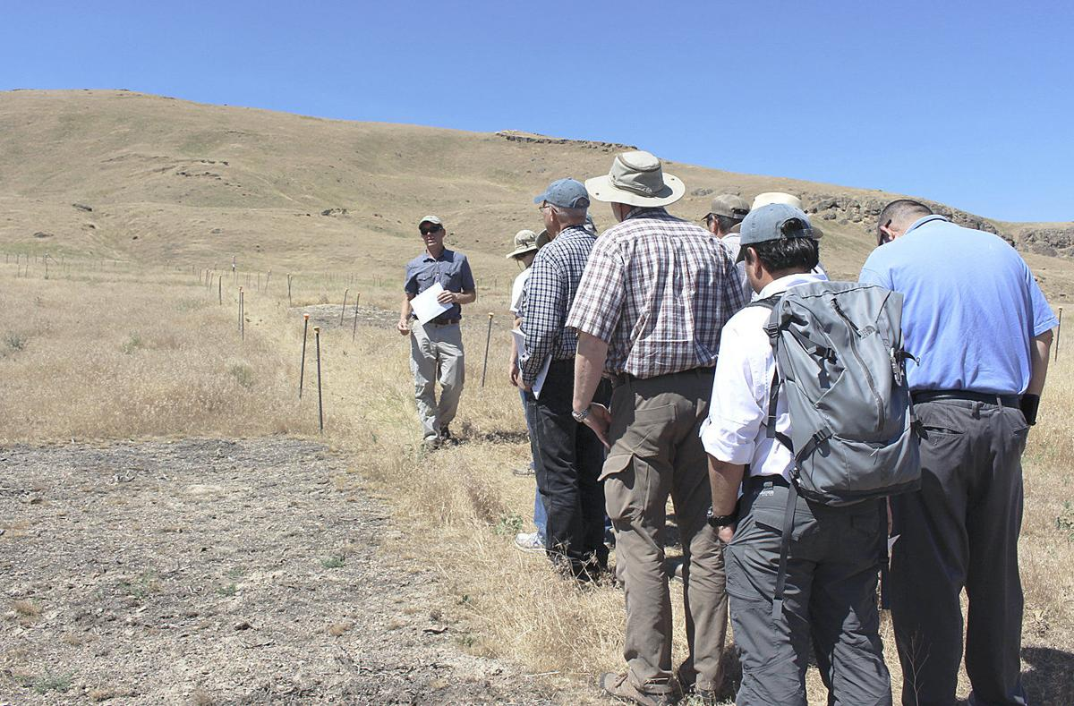 Bacteria enlisted to battle cheatgrass