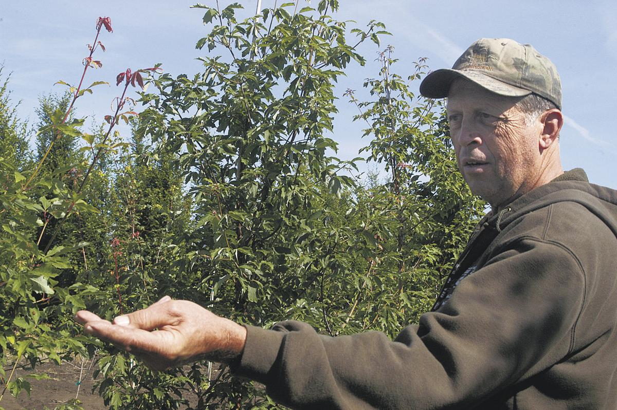 Enthusiasts share joy of maple trees