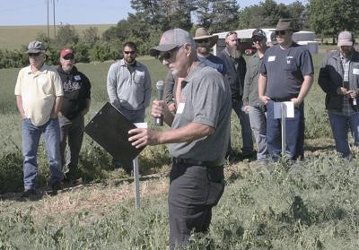 Washington farmer reports record winter pea yield