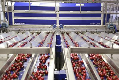Cherry packers embrace high-tech