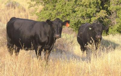 Grazing bill's passage by Senate committee raises optimism