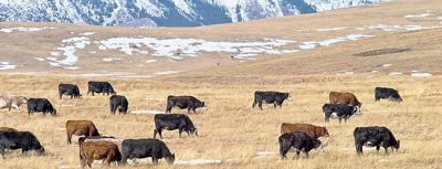 Idaho grazing