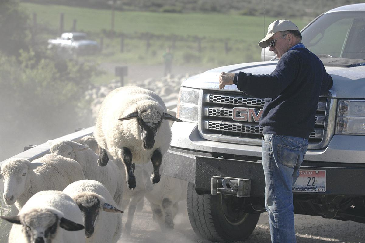 Financial planner helps sheep company owner diversify his investments