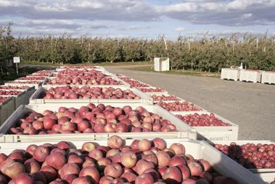 U.S.-China apple trade a step closer