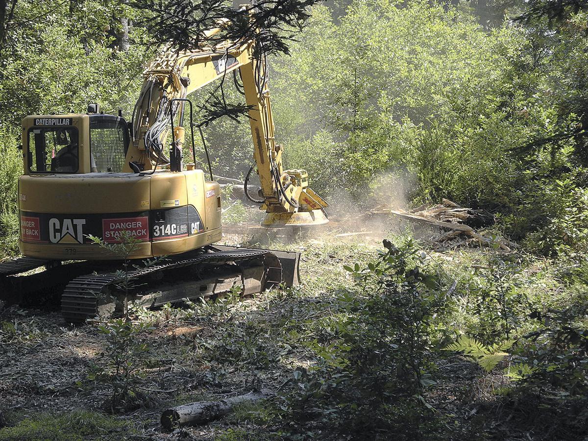 Sudden oak death 2