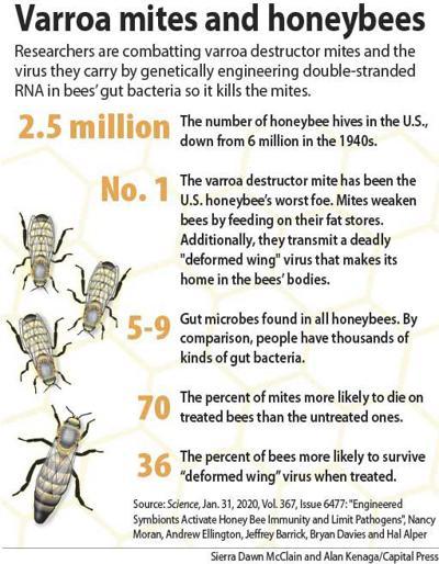 Varroa stats