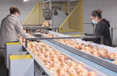 BC onion sort 2 B&N.jpg
