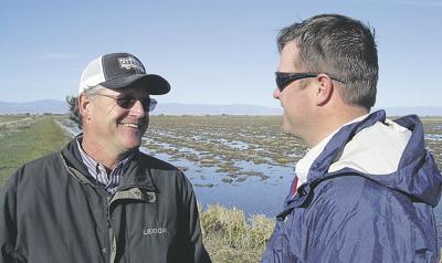 Rice fields welcome birds