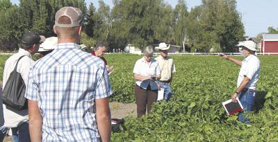 Growers consider soybeans