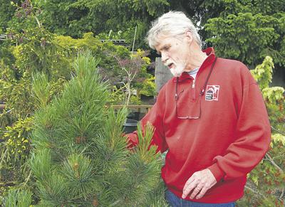 Smaller is better for Oregon Small Trees