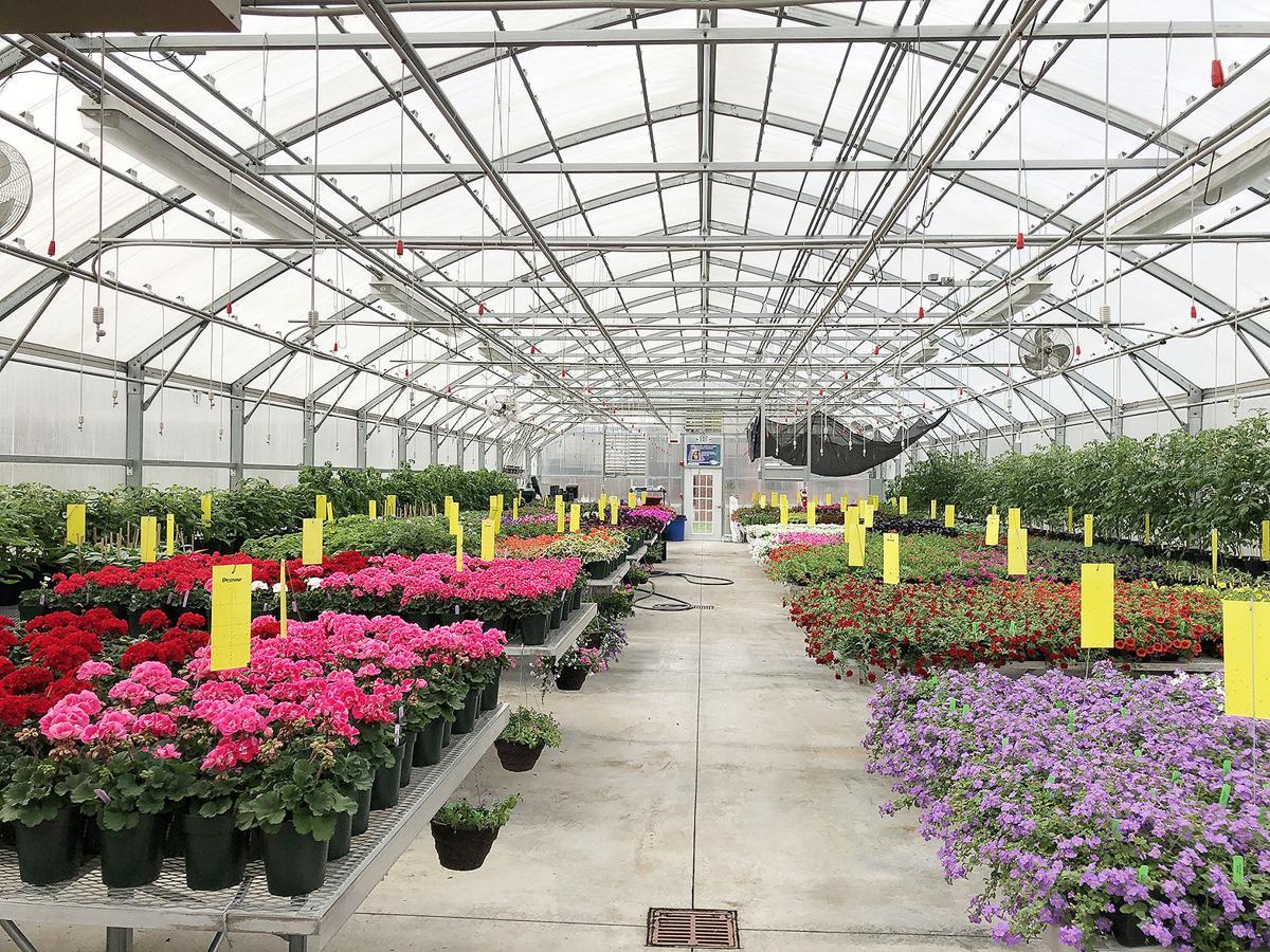 FFA plant sale 5