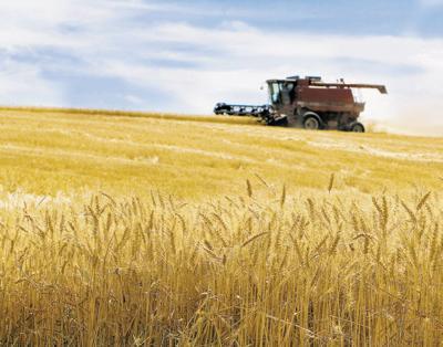 Uncertain futures baffle wheat industry