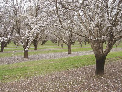 Almond investors get roasted in debate over California water