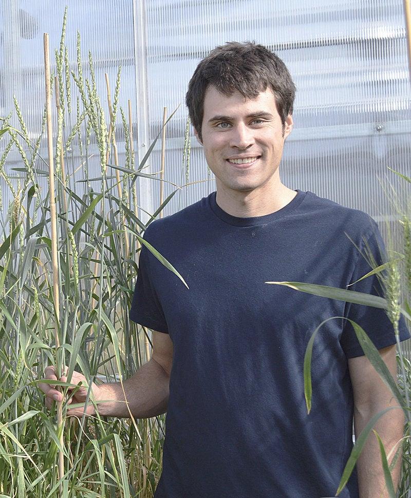 Perennial grain offers westside farmers options