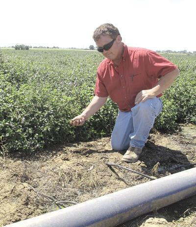 Idaho researchers testing benefit of drip-irrigated mint