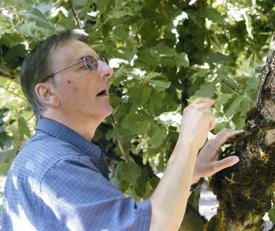EFB susceptible trees should go, expert says