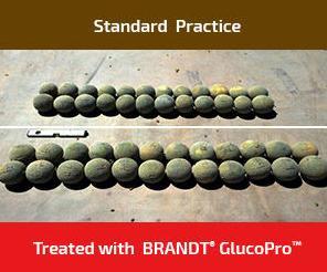 BRANDT GlucoPro