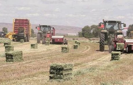 Western hay growers face challenges
