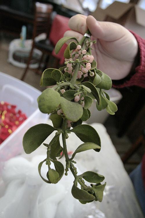 Mistletoe 3 Capitalpress Com