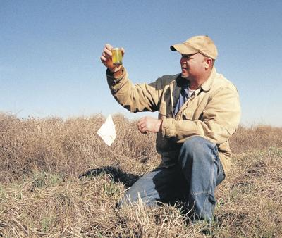 Beetle banks may save on weeds