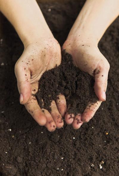 WSU surveys farmers on soil health before January workshop