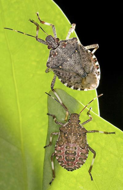 Researchers: Vineyards may face increased pest pressure